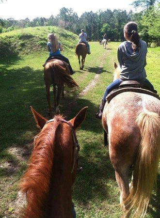 Shenandoah Stables Horseback Riding