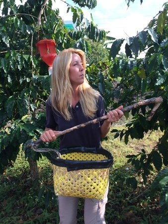 Hula Daddy Kona Coffee: Jessica demonstrating how they pick the beans
