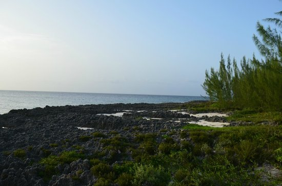 The Cracked Conch by the Sea: View from the outdoor seating area