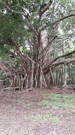 Hacienda del Mar: Nature