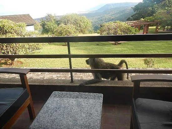 Lake Manyara Wildlife Lodge: Our baboon on our balcony