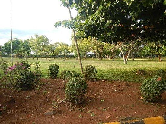 Lake Manyara Wildlife Lodge: The front lawn of the lodge