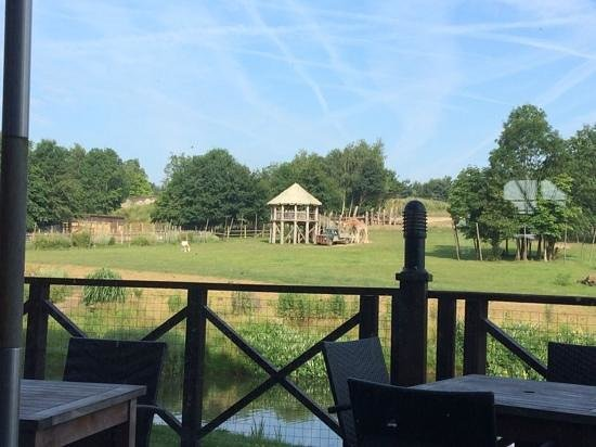 Chessington Safari Hotel : Our view at breakfast