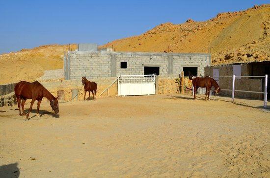 Petra Bed and Breakfast: Patricia's horses
