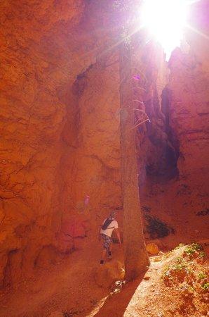 Navajo/Queens Garden Loop: Bryce