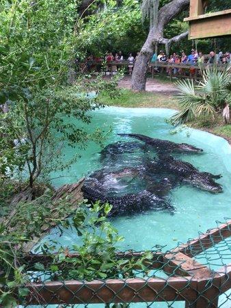 Edisto Island Serpentarium: Feeding at noon