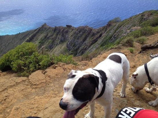 Koko Crater Trail: OUR DOGGIES LOVE THIS PLACE