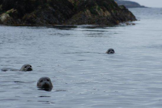 Parknasilla Resort & Spa : seals during our Kayak experience