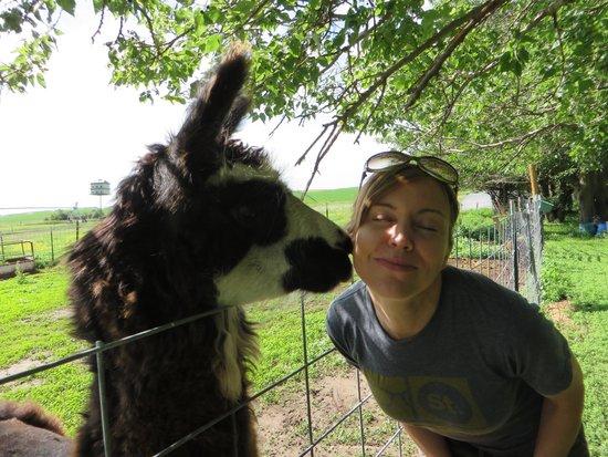 kissing llama picture of shepherd 39 s inn bed breakfast. Black Bedroom Furniture Sets. Home Design Ideas