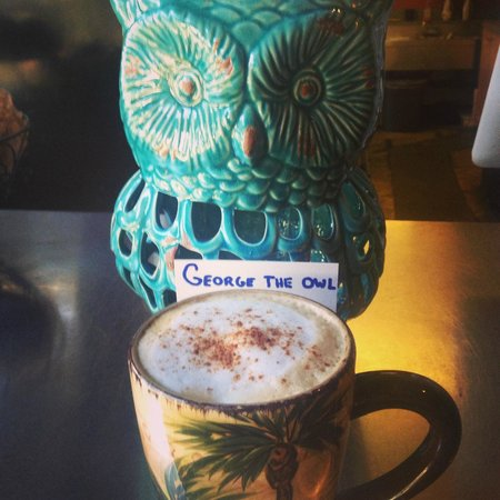 The Local Bean: George The Owl