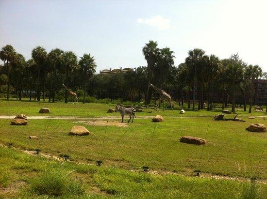Disney's Animal Kingdom Villas - Kidani Village: View from our villa