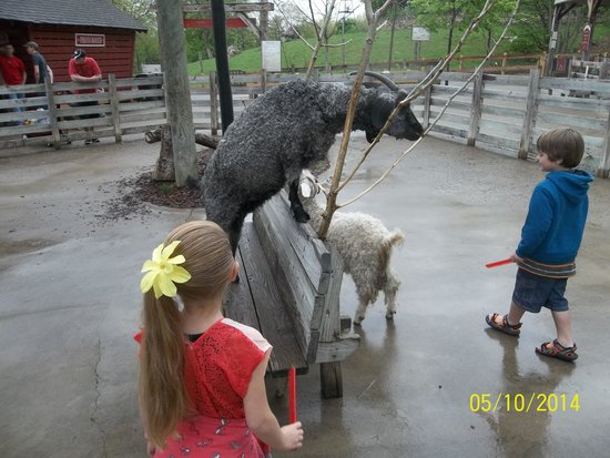 Columbus Zoo: Love the goats!