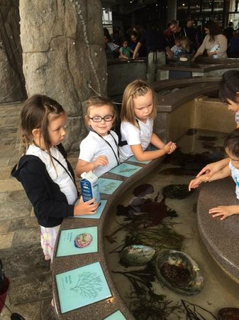 Monterey Bay Aquarium: Educational fun