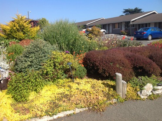 Surf Motel and Gardens : More beautiful grounds