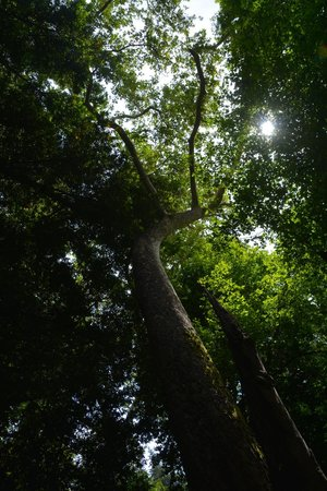 Henry Cowell Redwoods State Park: Make sure to look up!