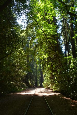 Henry Cowell Redwoods State Park: The railroad that runs through part of the park