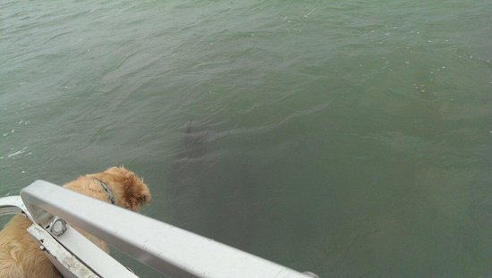 Fins to Feathers: Dolphins coming up to see the boat