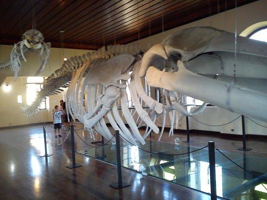 Fishing Museum : Aquario_1