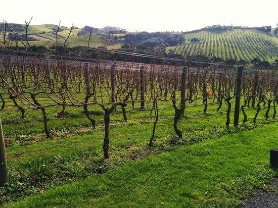 Waiheke Island Wine Tours: Te Motu