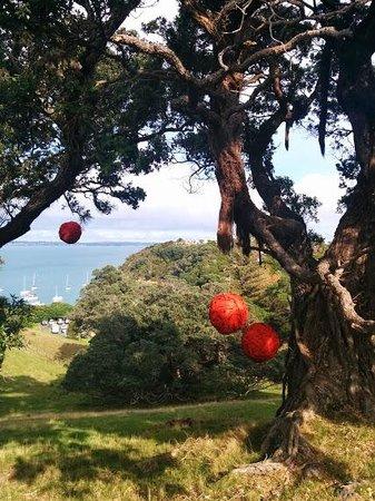 Waiheke Island Wine Tours: Kennedy's Point