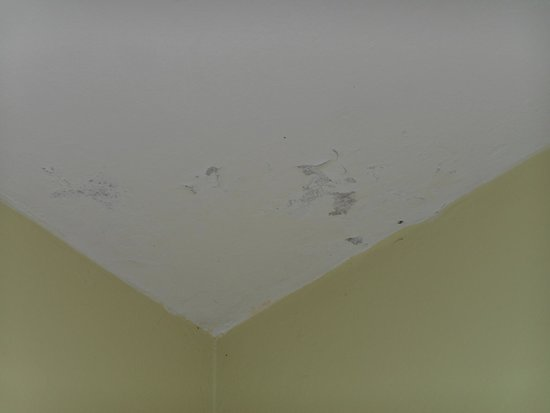 Toby's Resort : mildew on ceiling near the bed