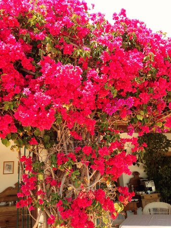 Hotel La Madrugada: beautiful