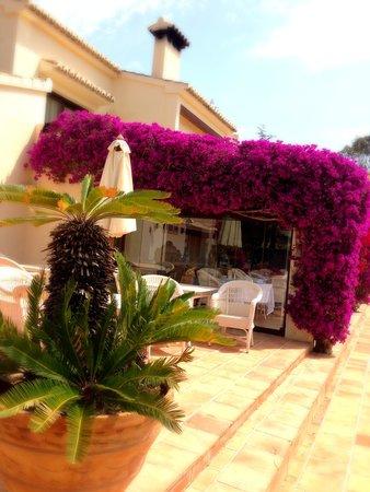 Hotel La Madrugada: pool Terrace