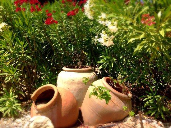 Hotel La Madrugada: Garden