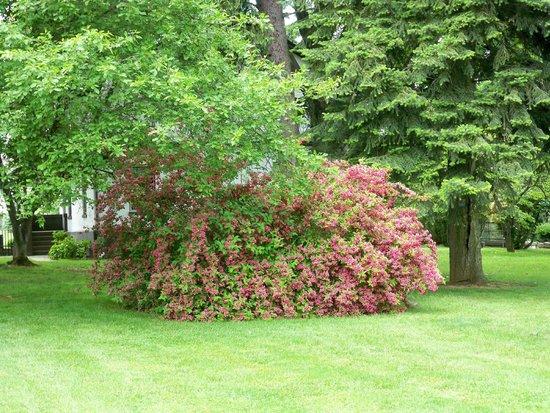 Antietam National Cemetery: Flowering trees