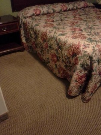 Rodeway Inn Paradise : Carpet and bed spread filthy