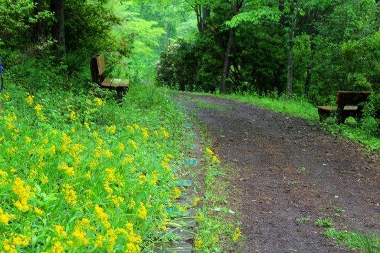 Fred Hamilton Gardens: Wildflowers