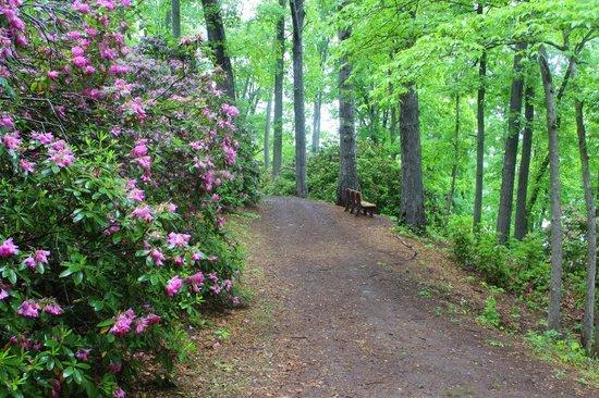 Fred Hamilton Gardens: Trail
