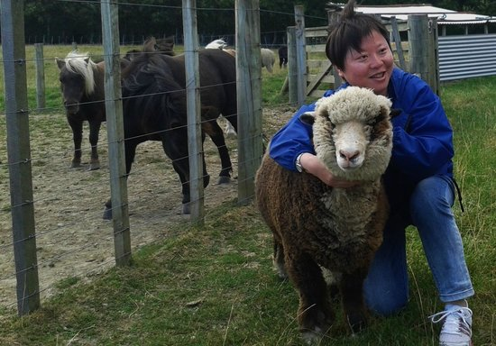 Kahikatea Gardens: Cuddles with Tongariro one of our pet sheep