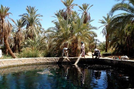 Fatnis Island (Fantasy Island): Water well cleaning