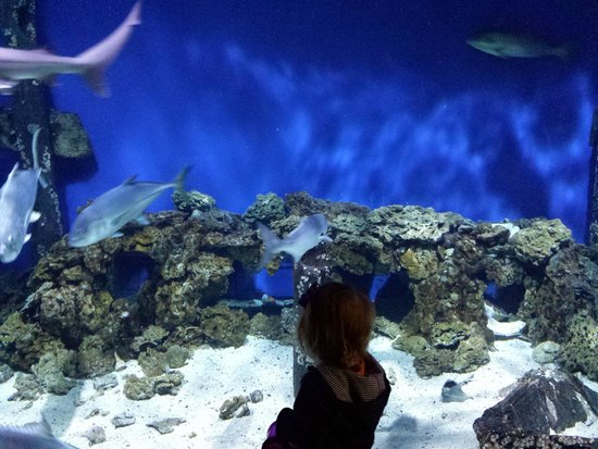 Virginia Living Museum: Giant fish tank wall