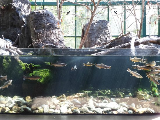 Virginia Living Museum: Fish exhibit