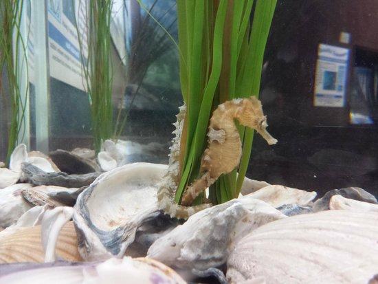 Newport News, VA: Seahorse