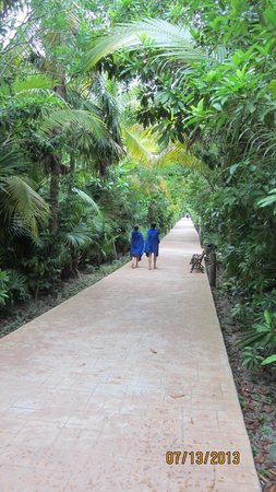 Catalonia Playa Maroma: the walkway to the lobby & might see a coati walking around