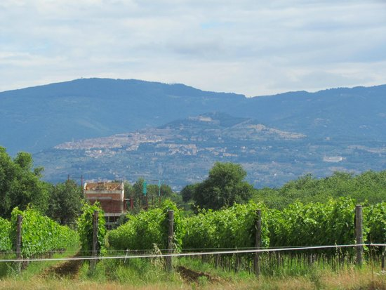 Azienda Agricola Leuta : Leuta vineyard tour - Cortona in the background