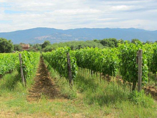 Azienda Agricola Leuta: Leuta vineyard tour