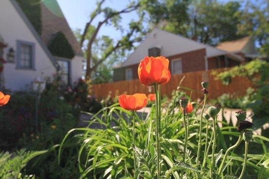The Garden Cottage Bed and Breakfast : Garden