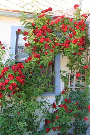 The Garden Cottage Bed and Breakfast: Rose Wall
