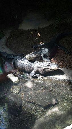 Toronto Zoo: crocx
