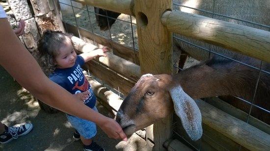Zoo Boise: Goat feeding petting zoo