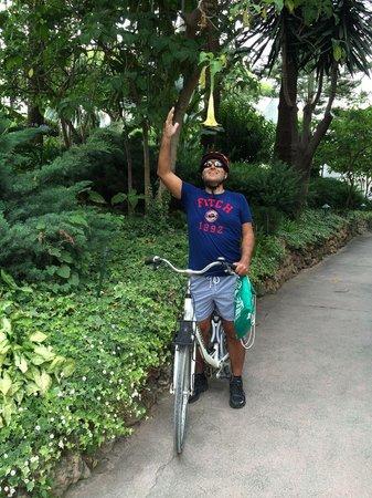 Puente Romano Beach Resort & Spa Marbella: Biking