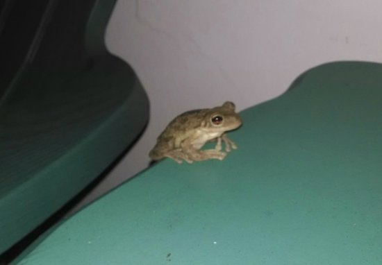 Palm Court Motel: Late Night Visitor on an Outside Patio Table