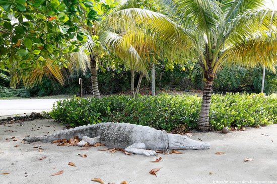 Davinoff's Concrete Sculpture Garden: 17 Feet of Concrete Crocodile