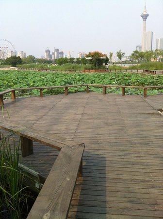 Shuishang Park: Lovely maze of docks surrounded by lilypads
