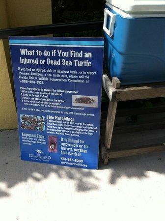 Loggerhead Marinelife Center: Placa