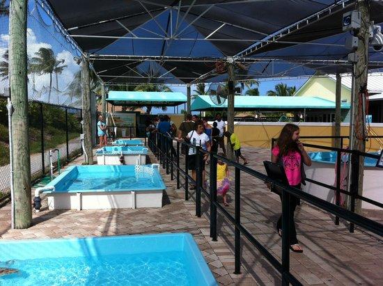 Loggerhead Marinelife Center: Centro